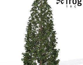 XfrogPlants Southern Magnolia 3D