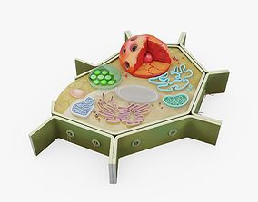 Plant Cell Visualization 3D model