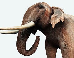 Elephant 3D Model animated