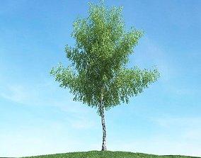 Tall Outdoor Tree 3D
