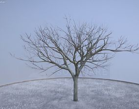 Plum Tree 8m Winter 3D model