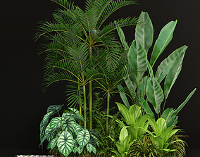 Plants collection 198 3D model