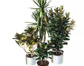 Indoor plants collection 3D model