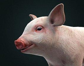 3D Pig Piglet model