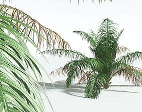 EVERYPlant Seashore Palm 10 --14 Models--