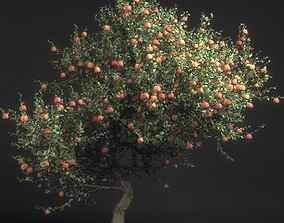 3D Pirus Malus Apple Tree