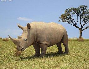 3D model White Rhinoceros Ceratotherium Simum