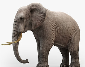 animated low-poly Animated Elephant 3D model