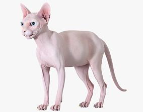 Sphynx Cat Pink 3D model
