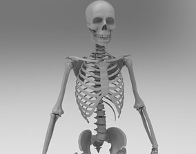 Skeleton low poly and high poly 3D model rigged