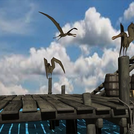 Archipelago Pelicans