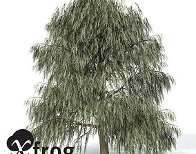 willow 3D model XfrogPlants Weeping Willow
