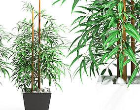 green 3D model BAMBOO PLANT