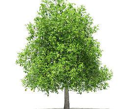 Avocado Tree with Fruits 3D model