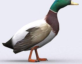 animated 3DRT - Duck