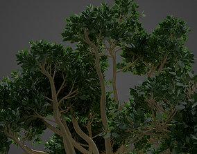 3D model 2021 PBR Rubber Fig Collection - Ficus Elastica