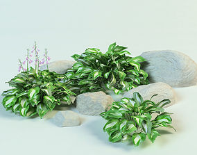 3D hosta undulata set plantain lily