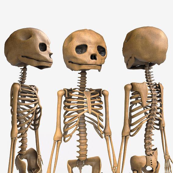 Foetus Skeleton - PBR