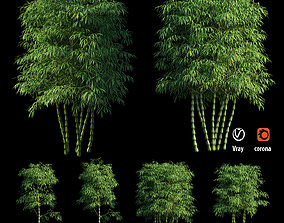 3D Bambusa ventricosa 02