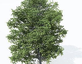 3D XfrogPlants Chestnut