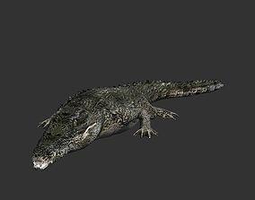 3D asset animated Crocodile Animation