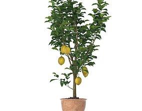 Lemon Tree 3d model fruit