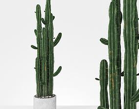 3D model Plant 6 2
