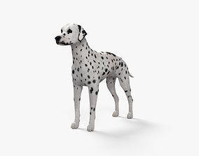Dalmatian HD 3D