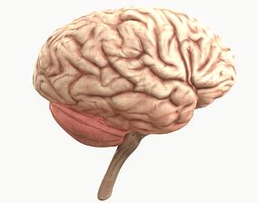 3D asset game-ready Human Brain
