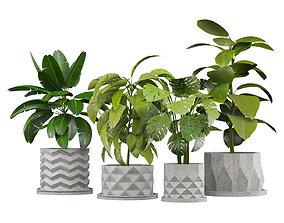 Set of Plants in Concerete Pots - 4 Plants - 3D model