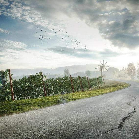 wine-growing hills