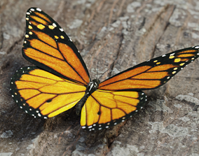 3D model game-ready Monarch butterfly - realistic insect