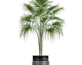 3D model thrinax Decorative palm in a flowerpot 729