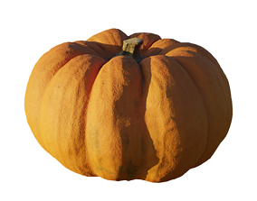Realistic Pumpking 3d Model