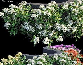 3D Ixora plant set 19