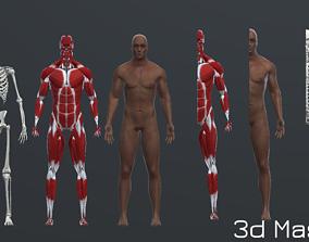 Human Man Scull Humanoid Skeleton Muscle Skin 3D asset 1