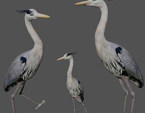 3D asset Heron bird