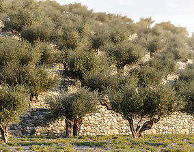 Olive Tree X 5 Pack 3D