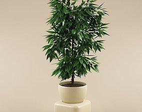3d Plant 3D model