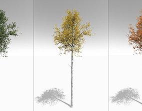 Seasonal Tall Mature Quaking Aspen - Variation 2 3D model