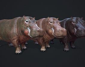 PBR Hippopotamus 3D asset animated