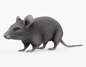3D Mouse with Fur