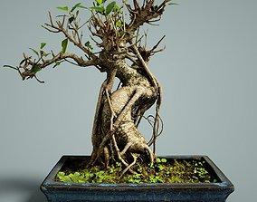 3D model realtime Bonsai Tree