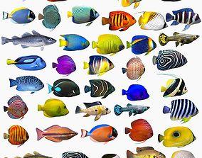Fish Megapack 41 3D model