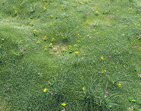 3D Grass with flowers
