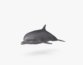Common Bottlenose Dolphin HD 3D