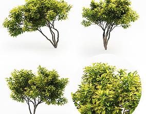 3D model Magnolia Set