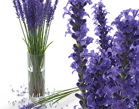 The bouquet of lavender in a vase 3D