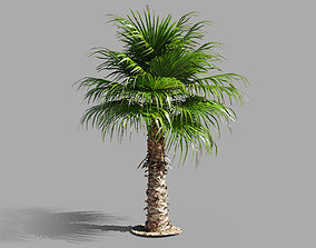 Palm tree - photoscan 03 3D asset