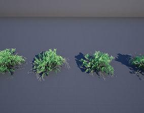 3D asset Sarcobatus bush
